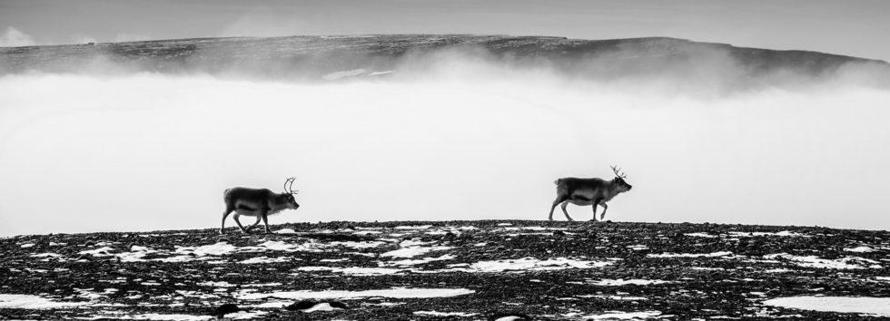 Arktyka w obiektywie